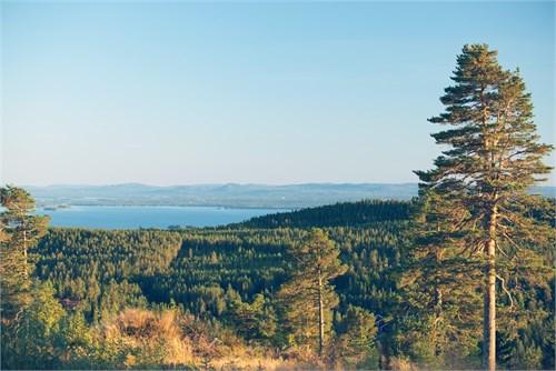 Utsikt från Råtjärnsberget