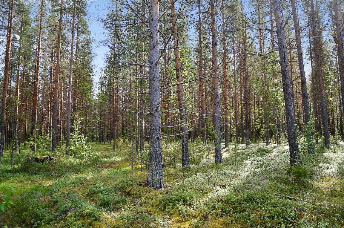 6,9 ha skog